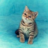 Bärande exponeringsglas för kattunge som sitter filten Royaltyfria Bilder
