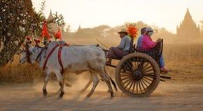Bärande folk för oxevagn på den lantliga vägen i Bagan, Myanmar Arkivbilder