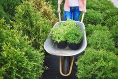 Bärande gröna plantor Arkivfoto