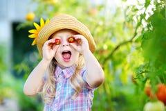 Bärande hatt för förtjusande liten flicka som väljer nya mogna organiska tomater i ett växthus Arkivbilder