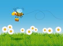 Bärande honung för bi i den blommiga ängen royaltyfri illustrationer