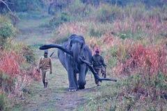 Bärande journal för elefant med vakter i Kaziranga Fotografering för Bildbyråer