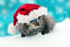 Bärande jultomten för liten kattunge hatt Royaltyfri Bild