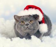 Bärande jultomtenhatt för kattunge Arkivbild