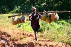 bärande kokosnötter Royaltyfri Foto