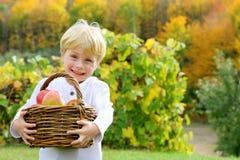 Bärande korg för gulligt lyckligt barn av äpplen på fruktträdgården Royaltyfria Bilder