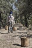 Bärande korgar för bondekvinna mycket med frukter Arkivfoton