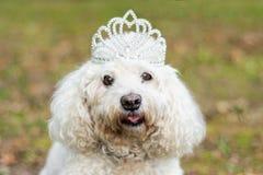 Bärande krona för hund arkivbilder