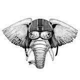 Bärande motorcykelhjälm för afrikansk eller indisk elefant, flygarehjälmillustration för t-skjortan, lapp, logo, emblem Royaltyfria Bilder