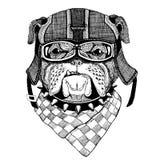 Bärande motorcykelhjälm för bulldogg, flygarehjälmillustration för t-skjortan, lapp, logo, emblem, emblem, logotypcyklist t Royaltyfri Bild