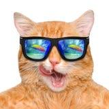 Bärande solglasögon för katt som kopplar av i havsbakgrunden Fotografering för Bildbyråer