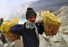 Bärande svavel för arbetare inom den Kawah Ijen krater. Indonesien Arkivfoto