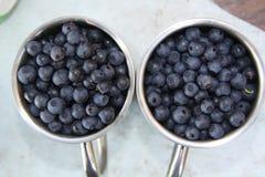 Bärblåbär Arkivbild