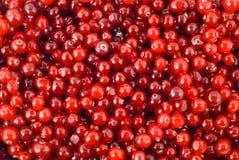 bärcranberry arkivbild