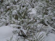 Bären alla har ätits av fåglar för vinter på vår skärgård och dess härliga natur av den arkivfoton
