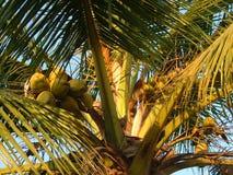 Bären-Früchte Lizenzfreies Stockbild