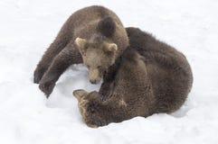 Bären im böhmischen Wald, Deutschland Lizenzfreie Stockfotografie