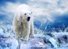 Bären-Jäger Lizenzfreies Stockfoto