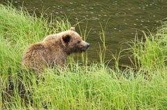 Bärenjunges stockfotos
