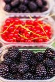 Bärfrukter på marknadsplatsen - organiska blåbär, hallon Royaltyfri Foto