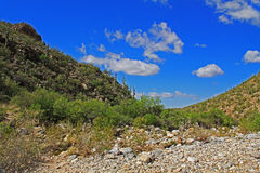 Bärn-Schlucht in Tucson, AZ stockfoto