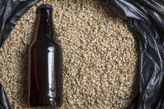 Bärnstensfärgad malt med flaskan, öl som bryggar ingredienser royaltyfri foto