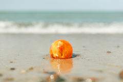 Bärnstensfärgad sten på sand royaltyfri fotografi