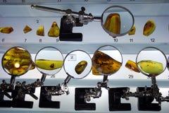Bärnstensfärgad utställning royaltyfria bilder