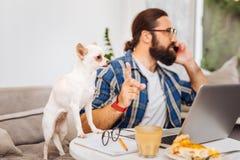 Bärtiger gutaussehender Mann, der über das Telefon und den beruhigenden Hund spricht stockfotos