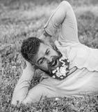 Bärtiger Mann mit Gänseblümchenblumen im Bart legen auf Wiese, Mageres an Hand, Grashintergrund Mann mit Bart auf gähnendem Gesic lizenzfreie stockfotos