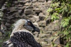 Bärtiger Vogel in einem Zoo Lizenzfreie Stockfotos