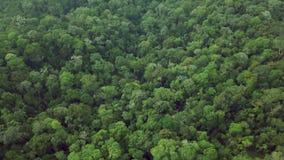 Bästa flyg- sikt av täta frodiga Rainforestträdkronor Intakt ursprunglig orörd ofördärvad natur lager videofilmer
