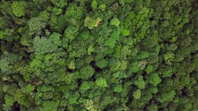 Bästa flyg- sikt av täta frodiga Rainforestträdkronor Intakt ursprunglig orörd ofördärvad natur arkivfilmer