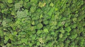 Bästa flyg- sikt av täta frodiga Rainforestträdkronor Intakt ursprunglig orörd ofördärvad natur stock video