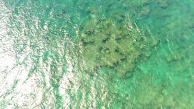 Bästa flyg- sikt för surr 4k av surfaren som långsamt glider i sommarvågor av turkosblåtthavvatten i hawaiansk seascape stock video