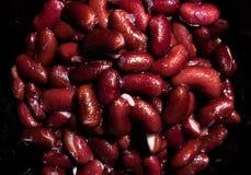 Bästa närbildsikt av på burk röda bönor arkivbild