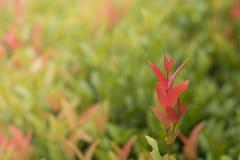 Bästa röda sidor med suddig bakgrund Arkivfoton