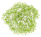 Bästa sikt av blomningpäronträdet som isoleras på vit Royaltyfri Foto
