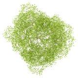 Bästa sikt av blomningpäronträdet som isoleras på vit Arkivbild