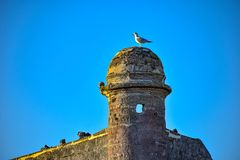 Bästa sikt av Castillo de San Marcos och seagull på lightblue bakgrund i Florida historiska kust arkivfoto