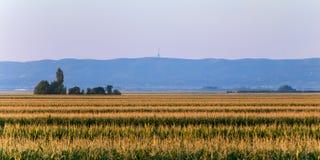 Bästa sikt av cornfielden i Serbien, på för berg- & nationalparkFruÅ för bakgrund den forested kaen Gora ¡ royaltyfria foton