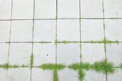 Bästa sikt av den fyrkantiga gångbanan för mortelblogg med grönt gräs royaltyfri fotografi