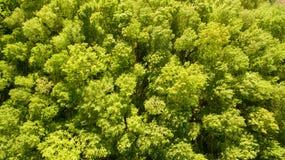 Bästa sikt av den gröna skogen på vårdag Arkivfoto