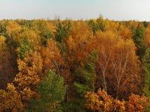 Bästa sikt av den härliga höstskogen med lövfällande och barrträd royaltyfria foton