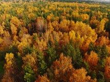 Bästa sikt av den härliga höstskogen med lövfällande och barrträd arkivbilder