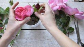 Bästa sikt av den kvinnliga dekoratören som ordnar rosor på trätabellen lager videofilmer