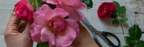 Bästa sikt av den kvinnliga dekoratören som ordnar rosor på trätabellen, begrepp - fiorist, ockupation, hobby arkivbild