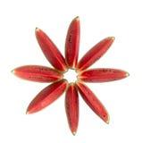 Bästa sikt av den skivade vattenmelon som ser som den röda blomman Royaltyfri Bild
