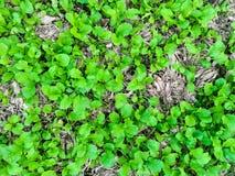 Bästa sikt av den unga växten i trädgården och unga trädet av grönsaker Royaltyfri Fotografi