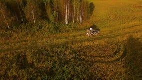 Bästa sikt av det gröna landskapet med bilen på längdlöpning i fält med aftonstrålar av solen footage Begrepp av billoppet royaltyfria foton